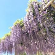 5月の新緑と花